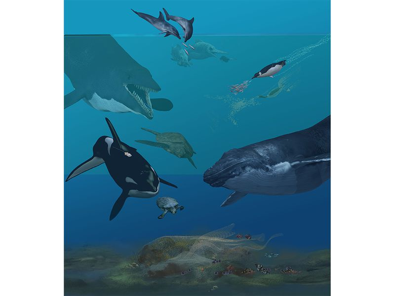 Karen Carr Ecology Illustration