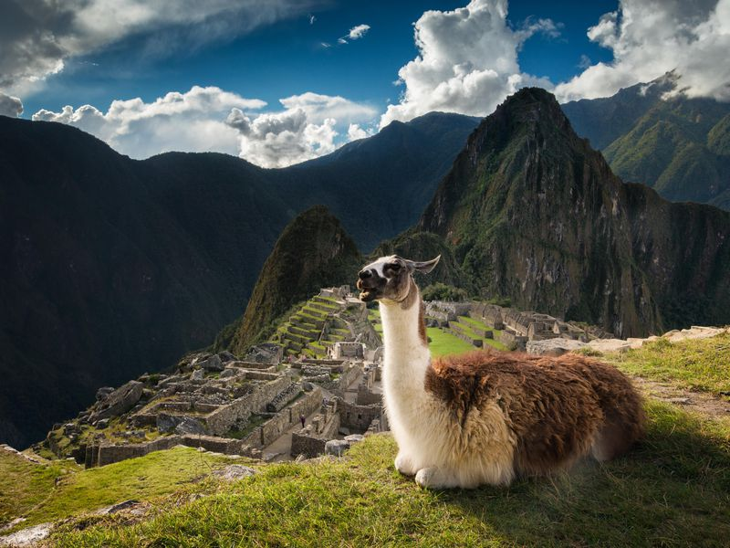 What Llama-Poop-Eating Mites Tell Us About the Rise and Fall