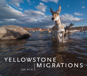 Preview thumbnail for video 'Yellowstone Migrations