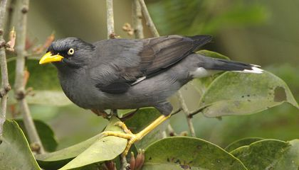 How Escaped Exotic Pet Birds Could Help Save Threatened Species