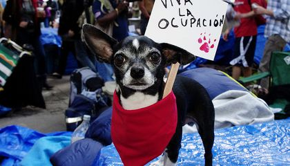 Occupy Wall Street Has Spawned a Financial Services Group