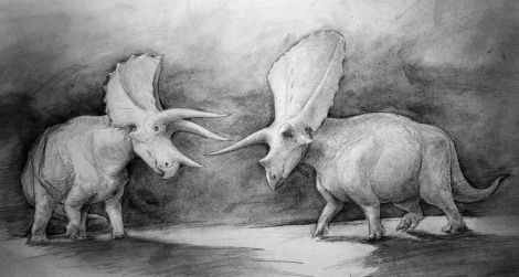 Triceratops (left) and Torosaurus (right)