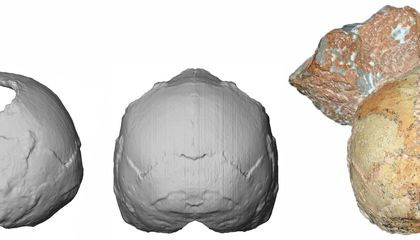 This 210,000-Year-Old Skull May Be the Oldest Human Fossil Found in Europe