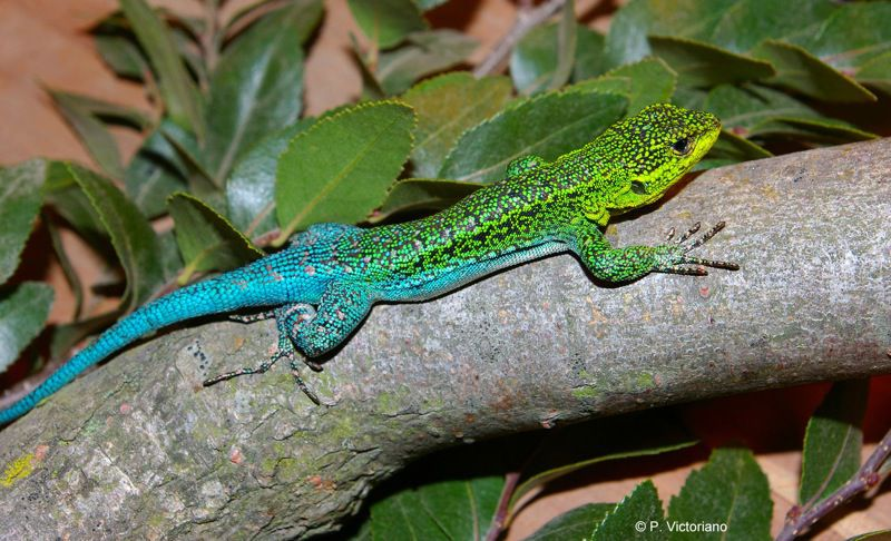 Image result for lizard