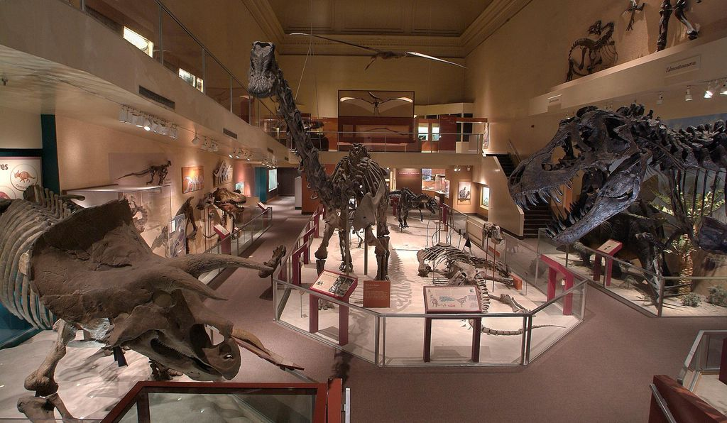 A view of the Dinosaur Hall in the National Museum of Natural History in 2003 shows a Triceratops at front left and a Tyrannosaurus Rex at right front; Diplodocus longus is at center.