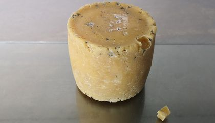 Cheese Made From Celebrity Belly Button and Armpit Bacteria Goes on Display