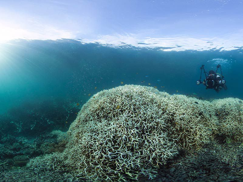 massive bleaching event hits the great barrier reef. Black Bedroom Furniture Sets. Home Design Ideas