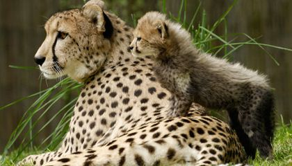 What Animal is the Best Mother? | Science | Smithsonian