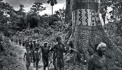 Sebastião Salgado Has Seen the Forest, Now He's Seeing the Trees