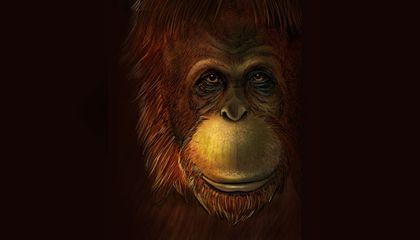 Scientists Now Know Where the Largest Ape to Ever Exist Sits in Primate Family Tree