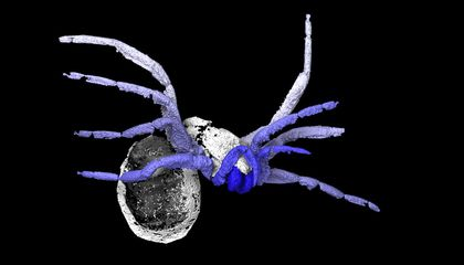 305-Million-Year-Old Fossil Helps Unravel the Spider's Evolutionary Web