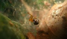 Hurricanes Are Making This Spider Species More Aggressive