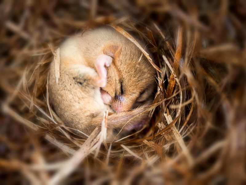 Can Humans Ever Harness the Power of Hibernation? | Science