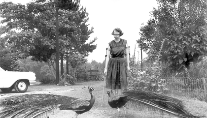 Georgia College Gifted Farm Where Flannery O'Connor Composed Southern Gothic
