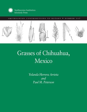 Grasses of Chihuahua, Mexico photo