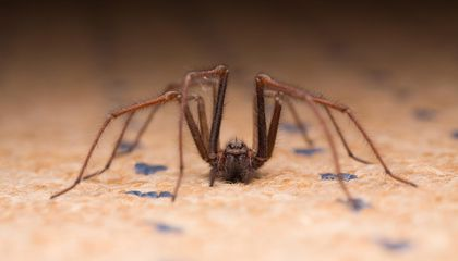 Dozens of Insects and Spiders May Live in Every Room of Your House