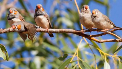 Noise Pollution Might Cut Birds' Lives Short