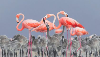 Prize-Winning Images Capture Birds in All Their Feathered Glory