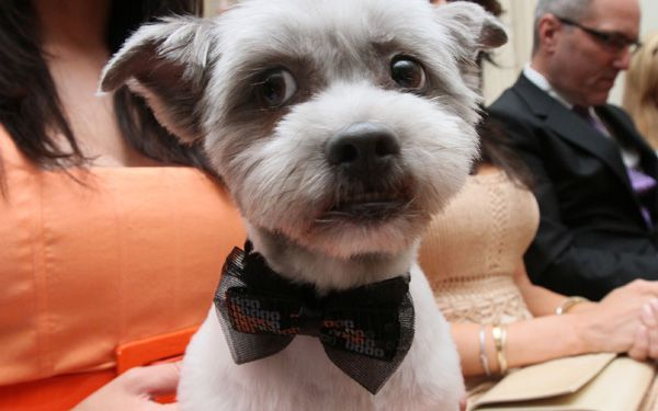 See tiny tuxes but no puppy love at doggy weddings
