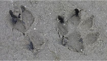 Blog Carnival #25: Reading Dino Tracks, Catching a Thief, Wikipedia Whiffs and More..