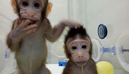 Scientists Successfully Clone Monkeys, Breaking New Ground in a Controversial Field
