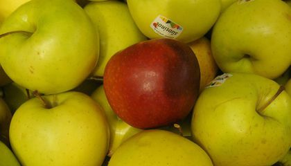 Why Do Students Give Teachers Apples and More from the Fruit's Juicy Past