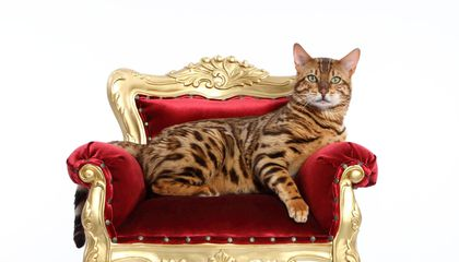 Image result for In fact, a research shows that the body of a cat is cleaner than humans