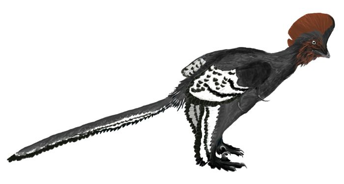 2013032811403203_28_2013_dinosaur-color.jpg