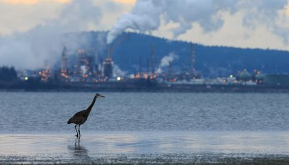 Study Estimates Clean Air Act Has Saved 1.5 Billion Birds