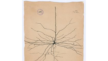 Revel in These Wondrous Drawings by the Father of Neuroscience