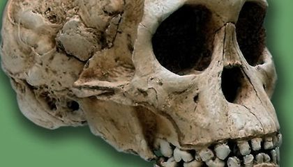 How Africa Became the Cradle of Humankind