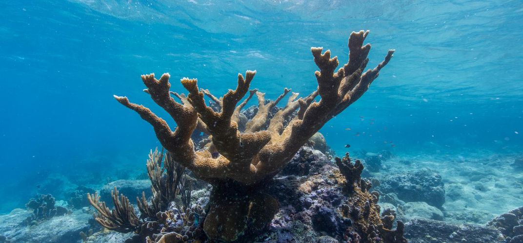 Caption: Helping Corals Fight Back