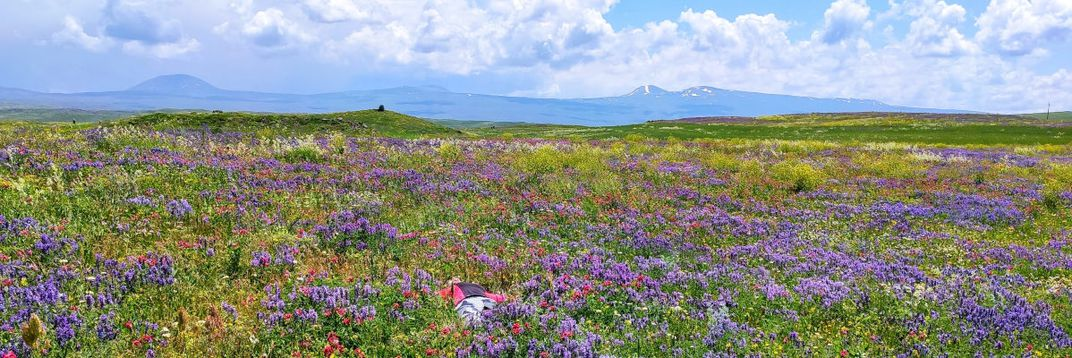Mountain flowers blooming on the hillsides of Mount Hatis (Photo by My Armenia Program)