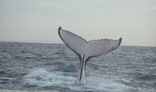Why Are Whales So Massive? It's All About Energy