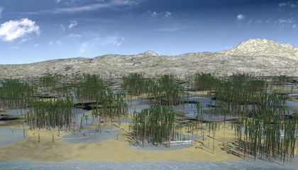 Fossil Trees Reveal the Oldest Known Forest in Asia