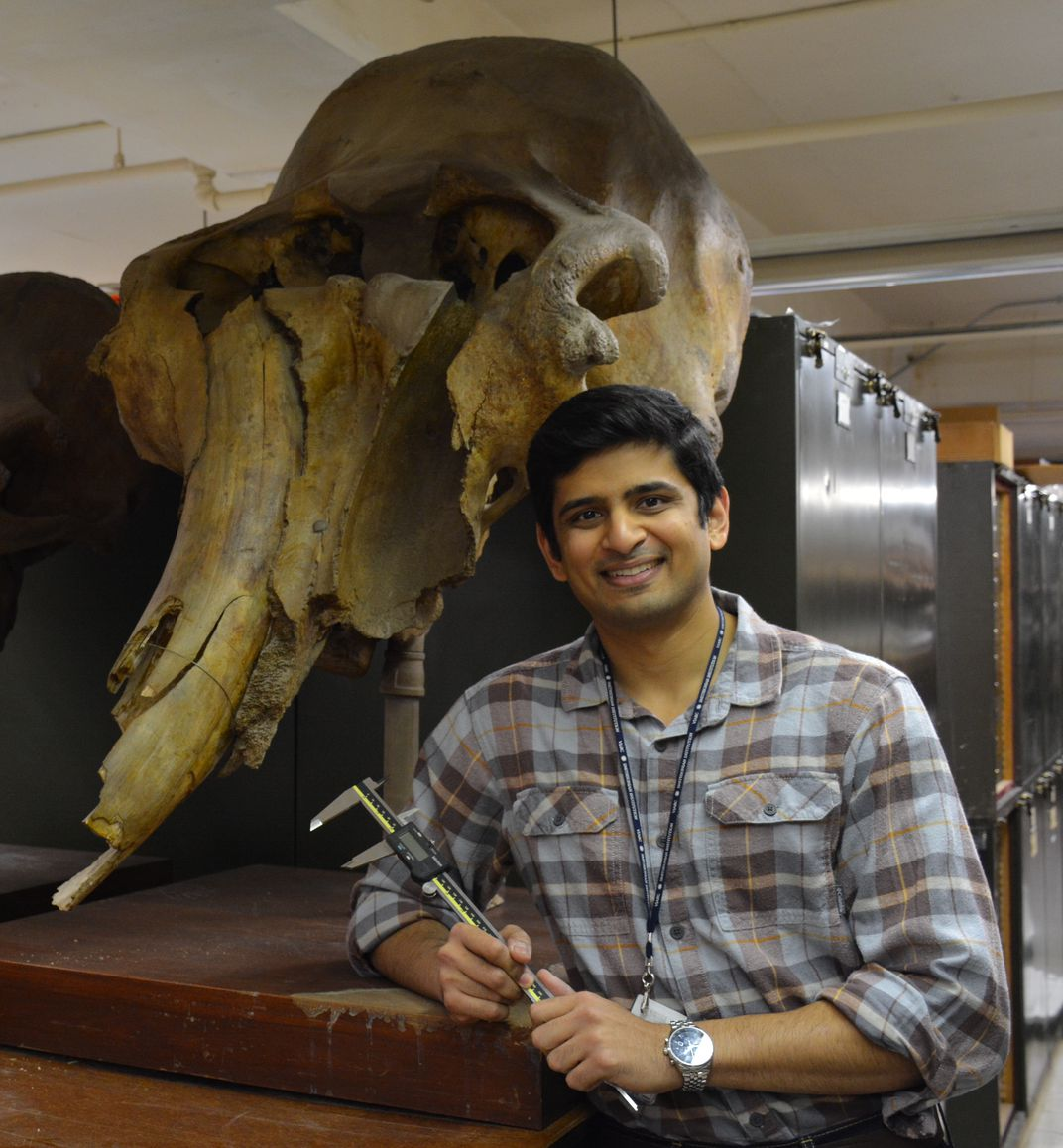 A person next to a mammoth skull.