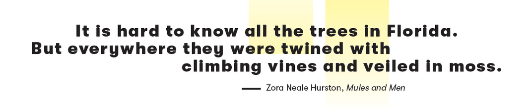 It is hard to know all the trees in Florida. But everywhere they were twined with climbing vines and veiled in moss. -Zora Neale Huston, Mules and Men