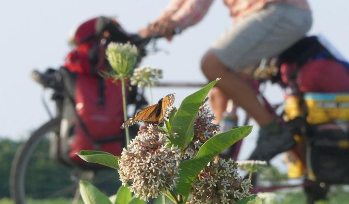 What I Learned Biking the Monarch Migration Route