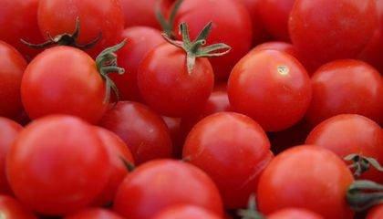 The Contentious History of the Cherry Tomato