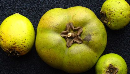 All the Insane Australian Fruit You Can Eat