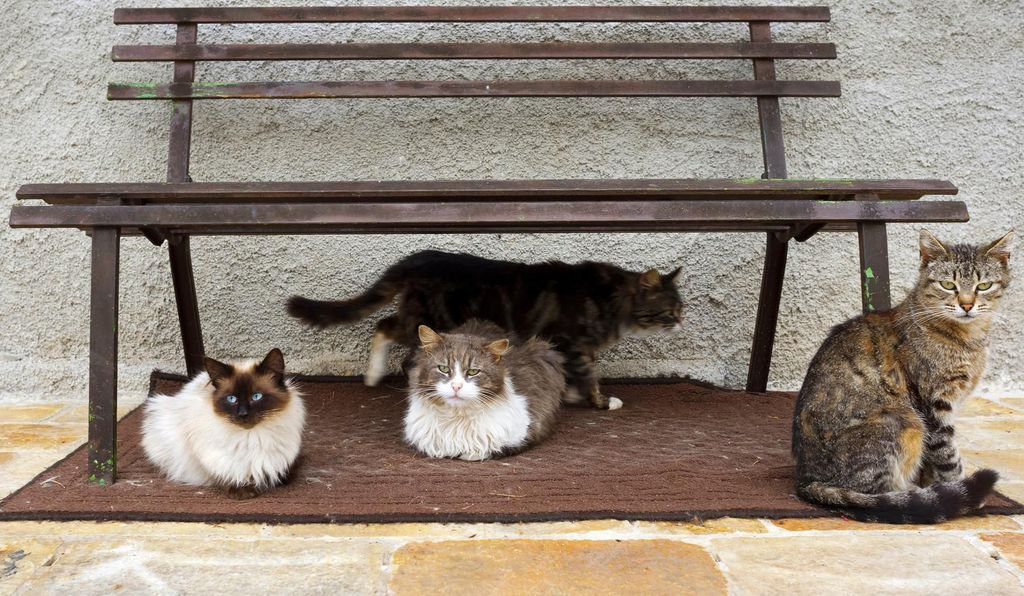 Stray cats rest under a park bench.