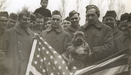 Image: The animals that helped win World War I
