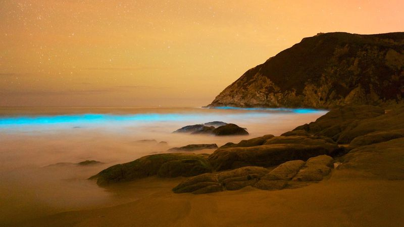 six ways to see bioluminescence in the worlds oceans