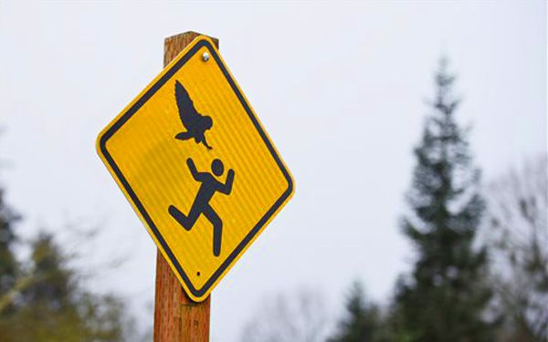 Watch out for that owl!