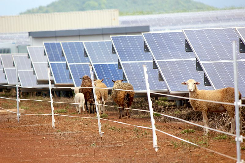 sheep-on-solar-farm.jpg