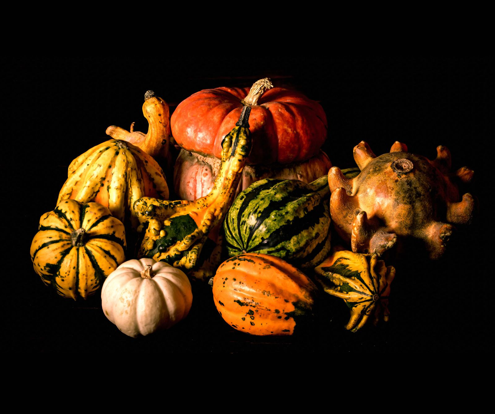 The Science Behind Decorative Gourd Season Science Smithsonian