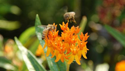 How to Protect Your Local Pollinators in Ten Easy Ways | At ... Native Bee Pollinator Garden Designs on native plant garden, native wildflower garden, native perennial garden, native bee habitat,