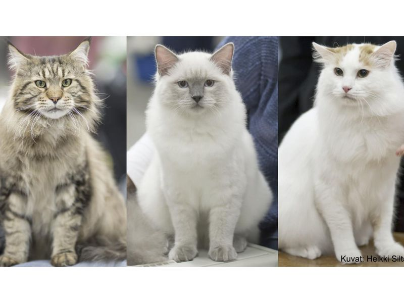 Your Cat's Attitude Actually Is Closely Linked to Its Breed, Survey Shows