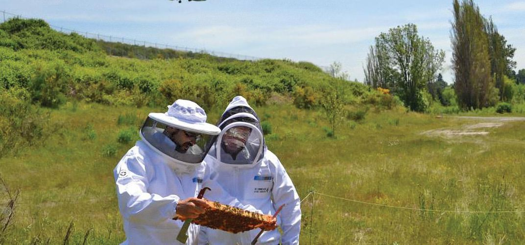 Caption: The Latest in Airport Jobs: Beekeeper