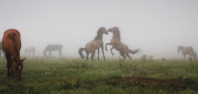 Rescued horses
